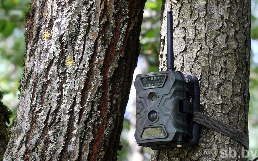 Более 280 нарушителей поймали с начала года фотоловушки в белорусских лесах.